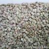 供应蚕豆批发 饲料蚕豆类 可打粉 江苏阜宁产地一手货源