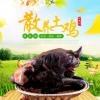 高山青花土鸡 正宗放养虫草鸡 3斤半左右 真空包装土鸡 云南土鸡