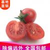 新鲜蔬菜批发水果樱桃小番茄西红柿圣女果农家自种沙拉菜5斤包邮
