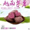 批发软糯紫薯 现挖新鲜番薯香薯地瓜 5斤装