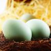 农家散养土鸡蛋 原生态绿壳鸡蛋 批发 农场直销 量大从优 包邮