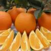 【99分果园】 宾川纽荷尔橙7.5斤 新鲜水果 橙子 量大从优