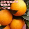 新鲜正宗雷波脐橙 标准大橙子基地批发5斤/盒 香甜橙子现摘现卖