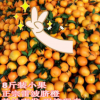 正宗特产雷波脐橙小果 8斤新鲜橙子批发 基地直销现摘现卖