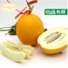 【产地直销】阎良久红瑞甜瓜供应5斤装瑞红香瓜批发销售 香脆汁多