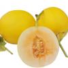 久红瑞 黄金甜瓜香瓜批发一件代发 5斤8斤