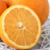 批发四川眉山东坡区特色水果9号脐橙华芳果园新鲜现摘彩箱包邮