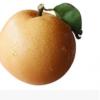秋月梨脆甜梨子莱阳梨非丰水梨雪梨新鲜水果梨5斤包邮山东特产