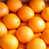四川脐橙眉山脐橙橙子一件代发5斤8斤装水果暂无货 请勿拍