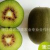 预售《蒲农源》四川蒲江红心猕猴桃精品中大果24个泡沫装 一件发