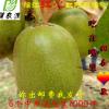 预售蒲江红心红阳猕猴桃奇异果 70-90克中果试吃装新鲜水果 一盒