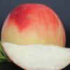 陕西应季新鲜水果水蜜桃 毛桃 农家果园桃子非油桃蟠桃 一件代发