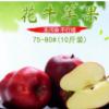 十斤装20颗新果 新鲜水果 甘肃花牛苹果 产地直销 一件代发包邮