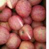 产地货源【条红】 山东苹果批发价格 最新红富士苹果批发市场供应