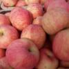 【官网】烟台红富士苹果 烟台红富士苹果价格80#山东苹果批发价格