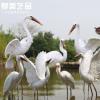 仿真鸟类白鹭摆件玻璃钢花园别墅庭院假山水池塘户外园林景观雕塑