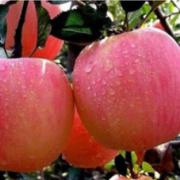 鄢陵县明丰果树种植专业合作社