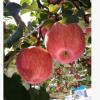 水果 洛川苹果 酸甜可口 口感清脆 老少皆宜 48元 10斤装