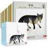 小小自然图书馆 全40册精编版 绘本 儿童3-6周岁幼儿园婴儿启蒙早
